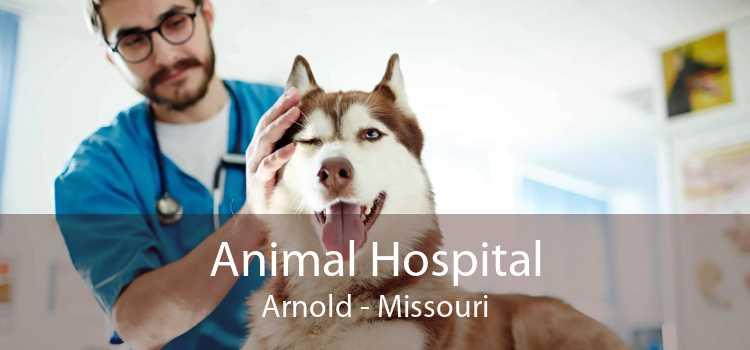 Animal Hospital Arnold - Missouri