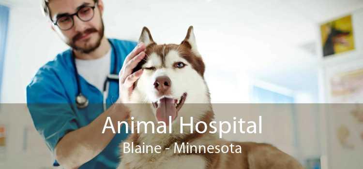 Animal Hospital Blaine - Minnesota