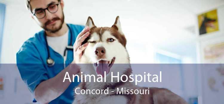 Animal Hospital Concord - Missouri