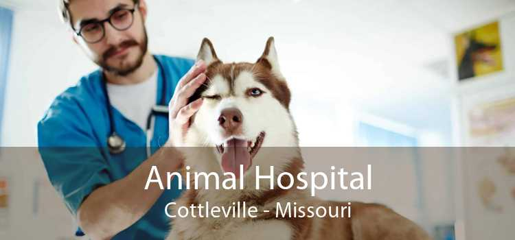 Animal Hospital Cottleville - Missouri