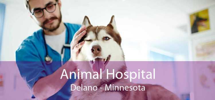 Animal Hospital Delano - Minnesota
