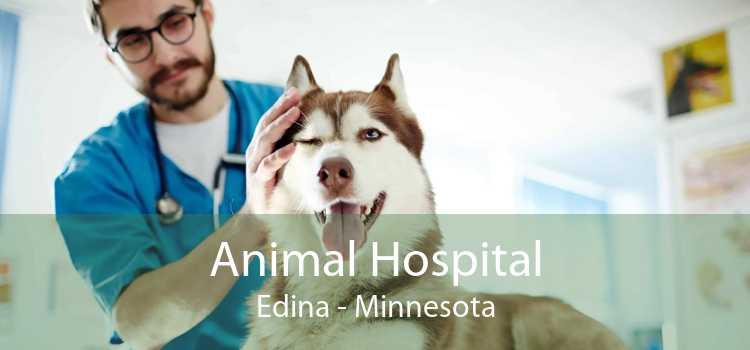 Animal Hospital Edina - Minnesota