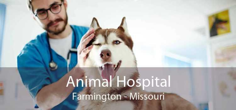 Animal Hospital Farmington - Missouri