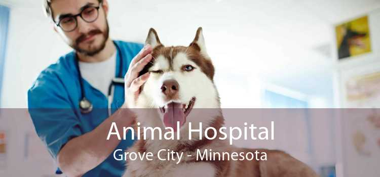 Animal Hospital Grove City - Minnesota