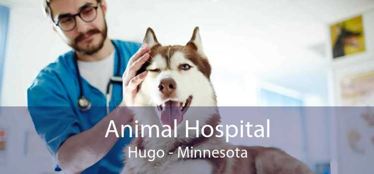 Animal Hospital Hugo - Minnesota