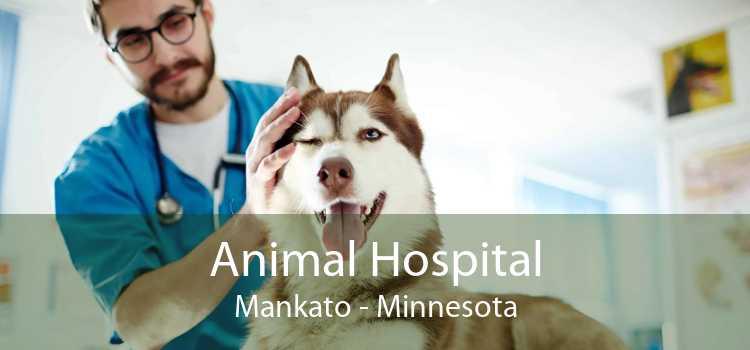 Animal Hospital Mankato - Minnesota