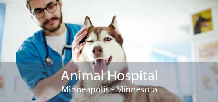 Animal Hospital Minneapolis - Minnesota