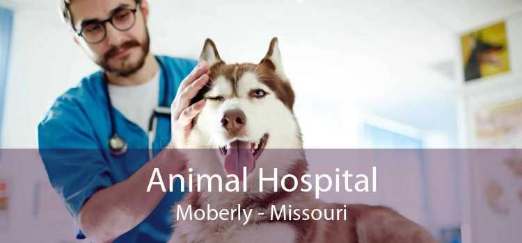 Animal Hospital Moberly - Missouri