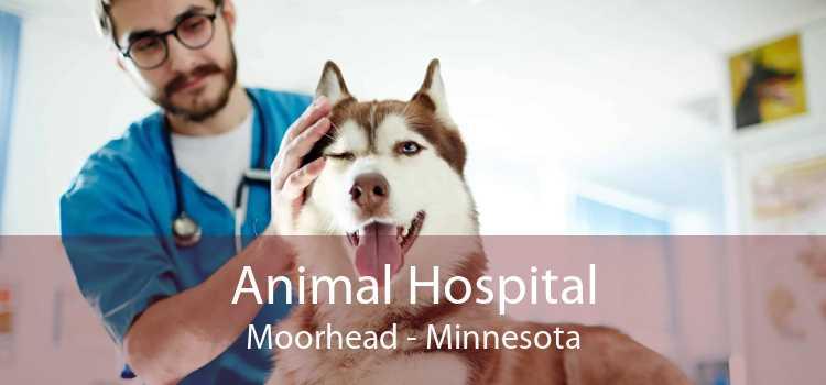 Animal Hospital Moorhead - Minnesota