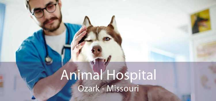Animal Hospital Ozark - Missouri