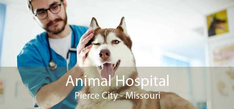 Animal Hospital Pierce City - Missouri