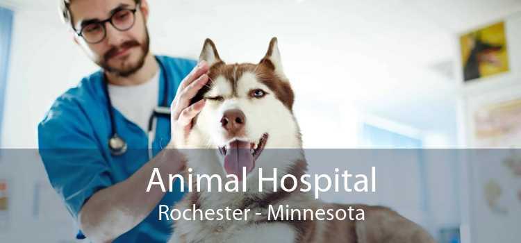 Animal Hospital Rochester - Minnesota