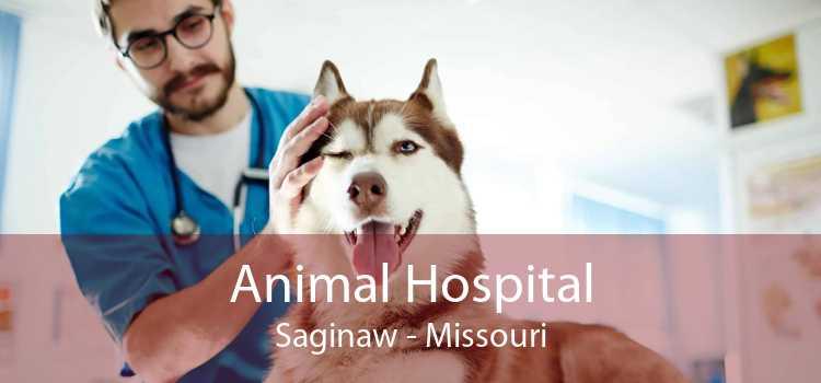 Animal Hospital Saginaw - Missouri