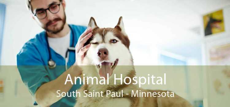 Animal Hospital South Saint Paul - Minnesota