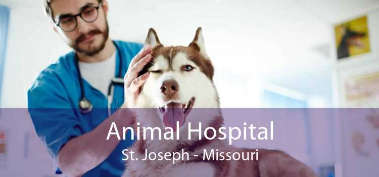 Animal Hospital St. Joseph - Missouri
