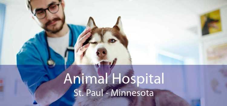 Animal Hospital St. Paul - Minnesota