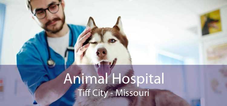 Animal Hospital Tiff City - Missouri