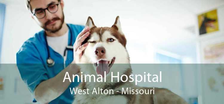Animal Hospital West Alton - Missouri