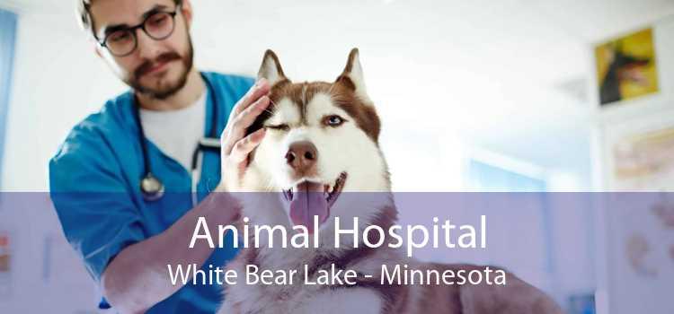 Animal Hospital White Bear Lake - Minnesota