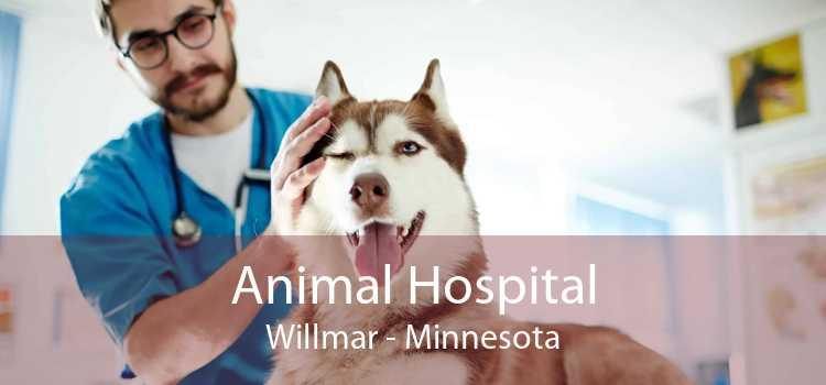 Animal Hospital Willmar - Minnesota