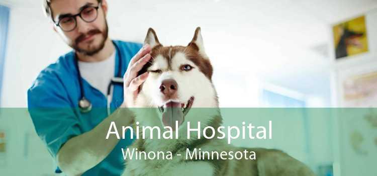 Animal Hospital Winona - Minnesota
