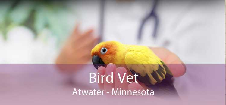 Bird Vet Atwater - Minnesota