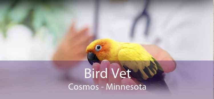 Bird Vet Cosmos - Minnesota