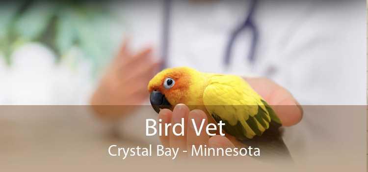 Bird Vet Crystal Bay - Minnesota