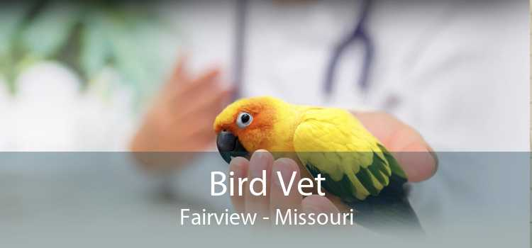 Bird Vet Fairview - Missouri