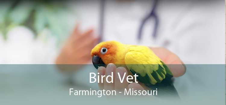 Bird Vet Farmington - Missouri