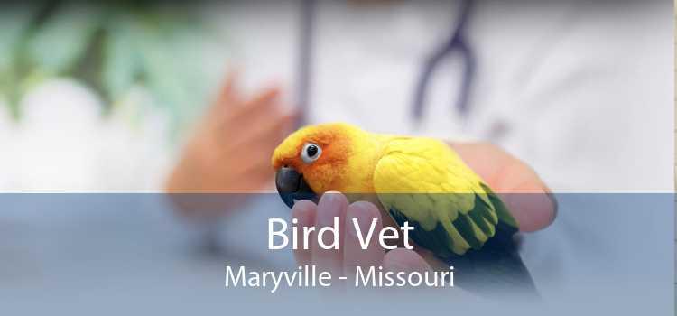 Bird Vet Maryville - Missouri