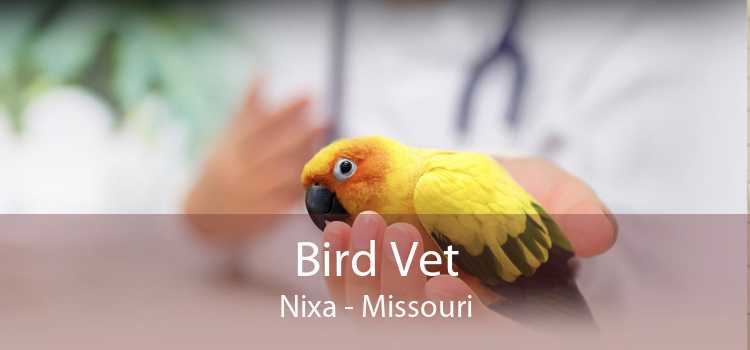 Bird Vet Nixa - Missouri