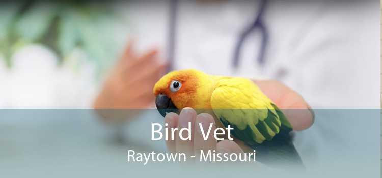 Bird Vet Raytown - Missouri