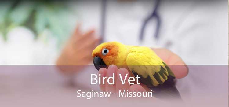 Bird Vet Saginaw - Missouri