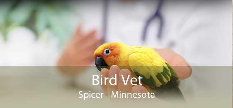 Bird Vet Spicer - Minnesota