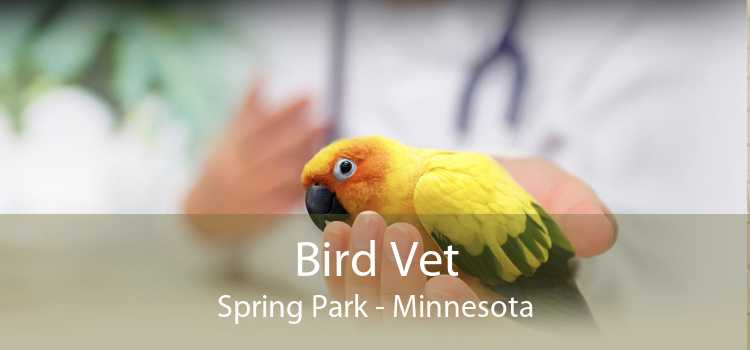 Bird Vet Spring Park - Minnesota