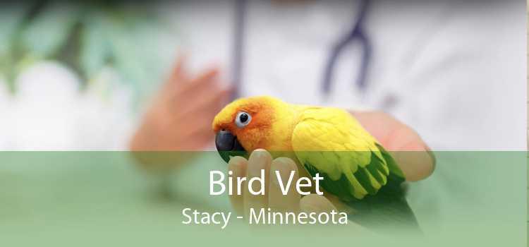 Bird Vet Stacy - Minnesota