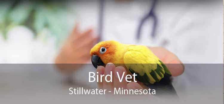 Bird Vet Stillwater - Minnesota