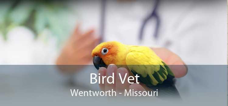 Bird Vet Wentworth - Missouri