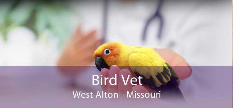 Bird Vet West Alton - Missouri