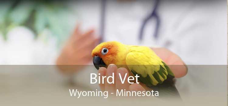 Bird Vet Wyoming - Minnesota