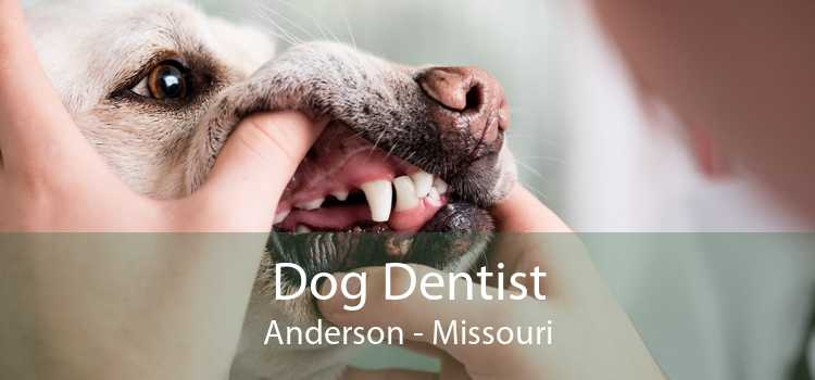 Dog Dentist Anderson - Missouri