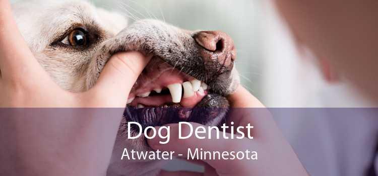 Dog Dentist Atwater - Minnesota