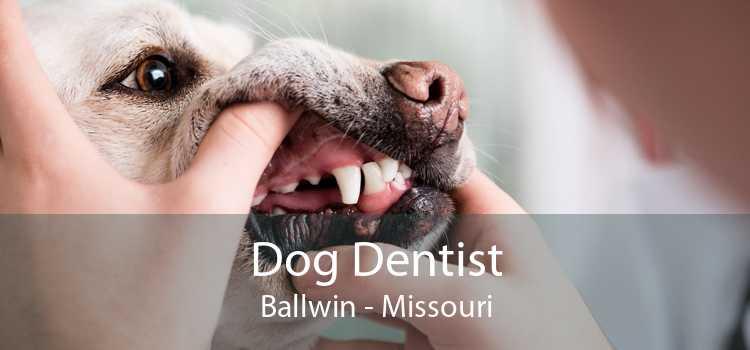 Dog Dentist Ballwin - Missouri