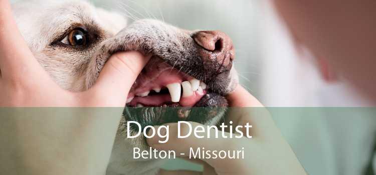 Dog Dentist Belton - Missouri