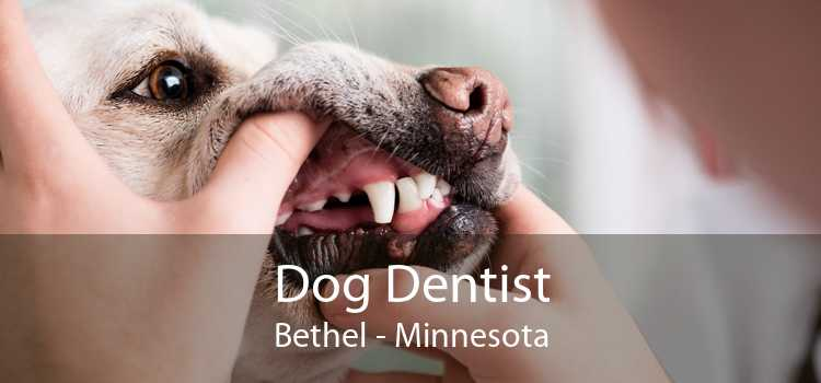 Dog Dentist Bethel - Minnesota