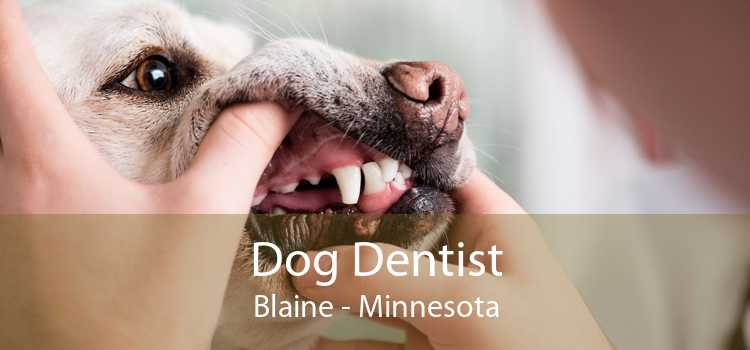 Dog Dentist Blaine - Minnesota