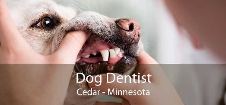 Dog Dentist Cedar - Minnesota