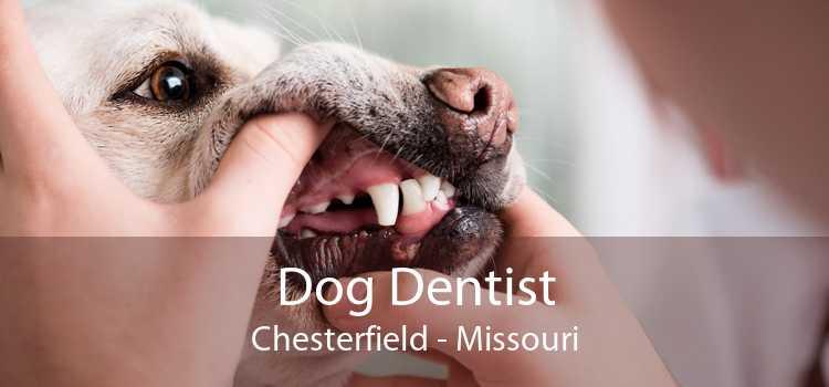 Dog Dentist Chesterfield - Missouri