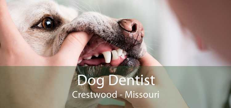 Dog Dentist Crestwood - Missouri